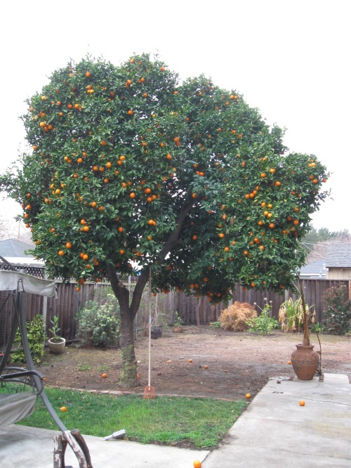 So many oranges